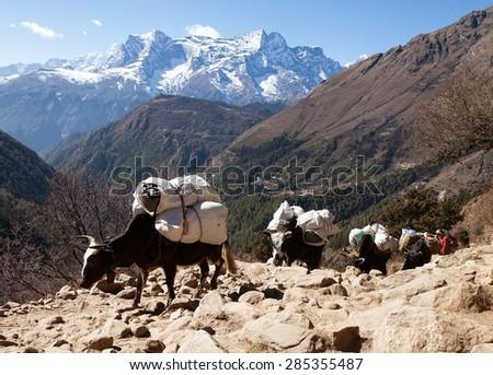 Caravan of yaks going to Everest base camp and mount Kongde, Sagarmatha national park, Khumbu valley, Nepal - stock photo