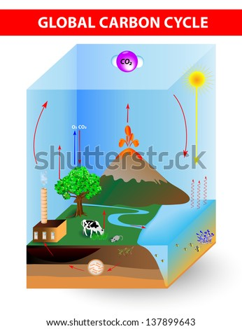 carbon cycle.  diagram shows the movement of carbon between land, atmosphere, and oceans - stock photo