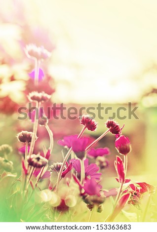 Card with field flowers with selective focus - stock photo