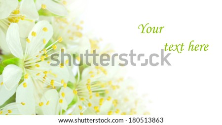 card with plum flower and space for your text - stock photo