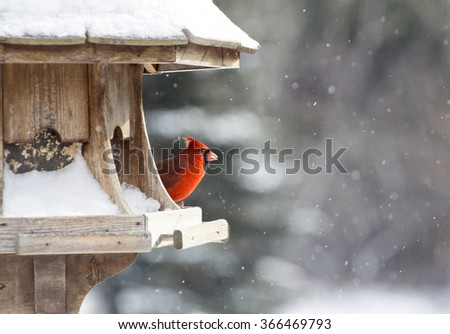 Cardinal at Bird Feeder Snow Storm Canada Male Red - stock photo