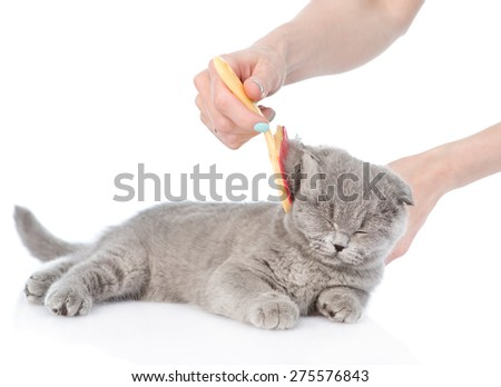 care for cat hair. isolated on white background - stock photo