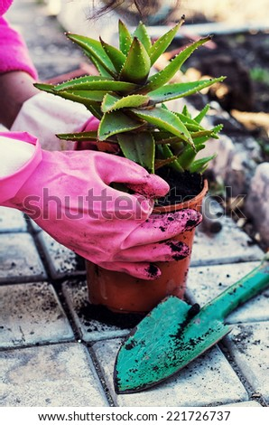 care home decorative potted plant - stock photo