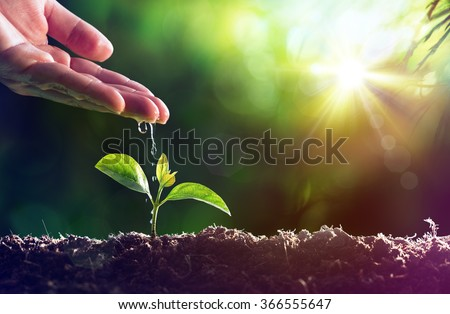 Care Of New Life - Watering Young Plant - Vintage Effect  - stock photo