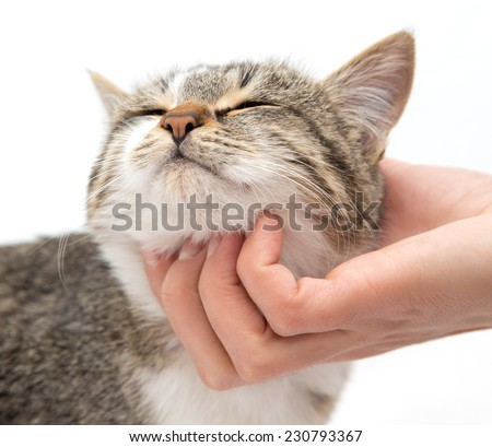 caress a cat on a white background - stock photo