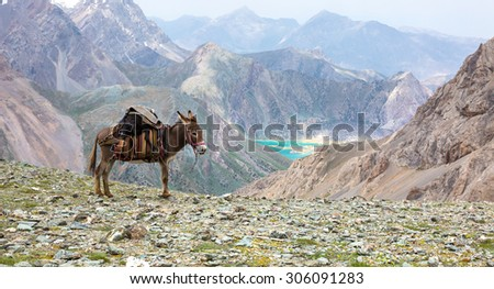 Cargo donkey in mountain area. Pack animal carrying sheep decorated with traditional harness and other gear for transportation of load on wild deserted mountain area blue lake perspective - stock photo