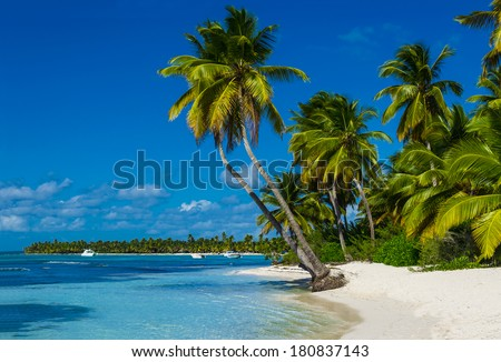 Caribbean beach with a lot of palms and white sand, Dominican Republic - stock photo
