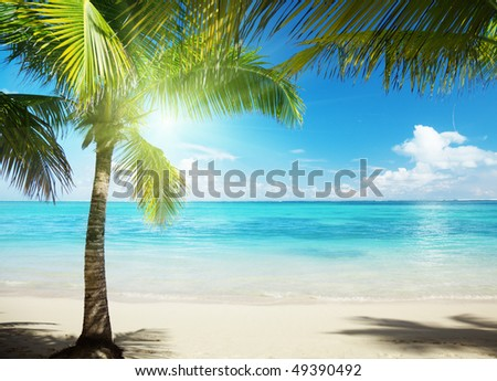 Caribbean sea and coconut palms - stock photo