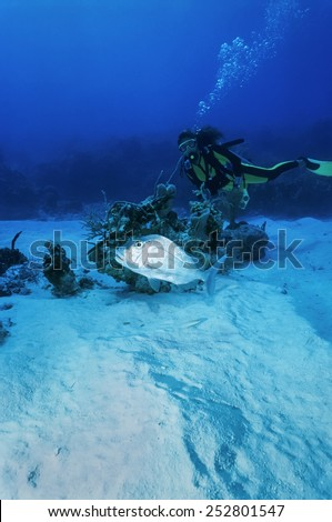 Caribbean Sea, Cayman Islands, diver and a snapper fish - FILM SCAN - stock photo