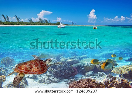 Caribbean Sea scenery with green turtle in Mexico - stock photo