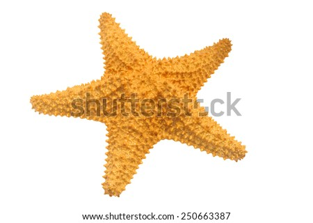 Caribbean starfish isolated on white background. Shallow DOF. - stock photo