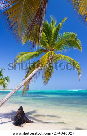 Caribbean wild nature scenery near the beach in Punta Cana - stock photo