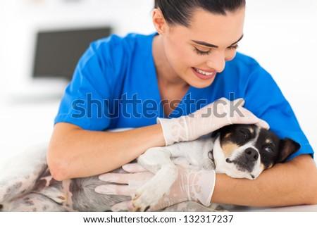 caring female vet comforting sick dog - stock photo