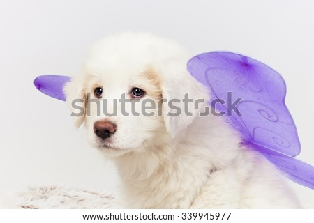 Carnival mastiff puppy dog wearing fairy wings. - stock photo