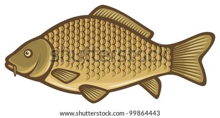 Carp fish (Common carp) - stock photo