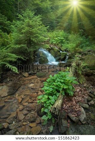 Carpathian mountain forest stream - stock photo
