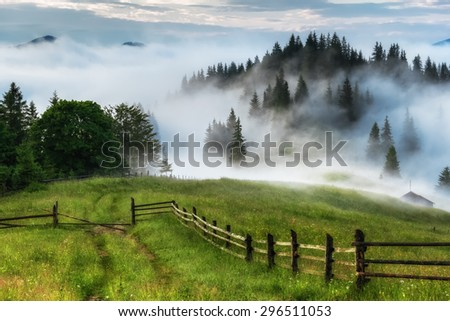 Carpathian Mountains. The road leading to the edge of the forest covered by fog - stock photo