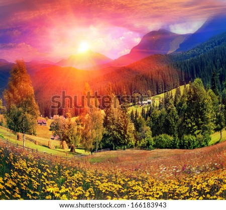 Carpathian Summer is the warmest and beautiful time of year, the abundance of flowers, clear lakes, lush alpine meadows of grass, fresh air attract people from cities Arnica, or Baranez. - stock photo