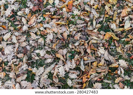 carpet of autumn leaves - stock photo