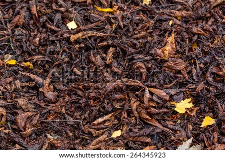 carpet of fallen leaves, the leaves brown and yellow colors - stock photo