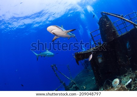 Carribean reef shark swimming by a ship wreck - stock photo