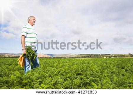 Carrot farmer in a carrot field - stock photo