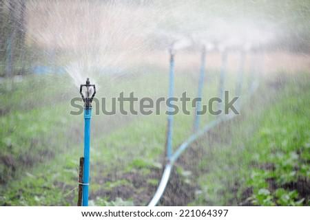 Carrots organic farm - stock photo