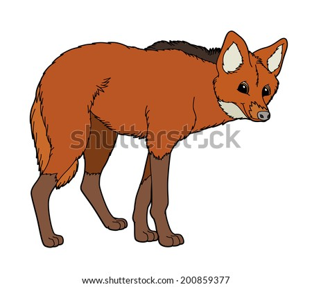 Cartoon animal - maned wolf - flat coloring style - illustration for children - stock photo