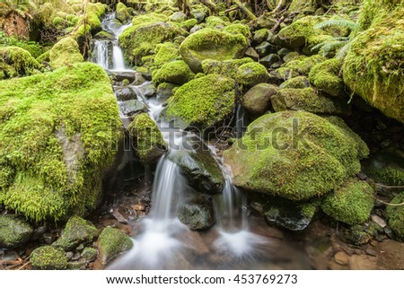 Cascades through moss covered rocks in Washington. - stock photo