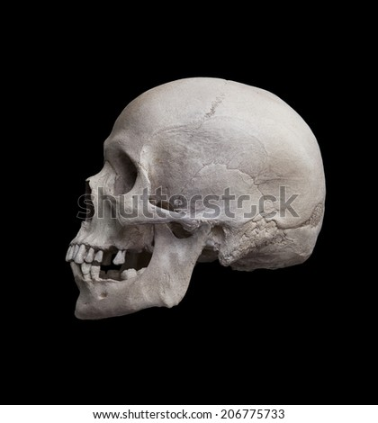 Cast of a human skull showing the left lateral view isolated on black. - stock photo