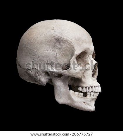 Cast of a human skull showing the right lateral view isolated on black. - stock photo