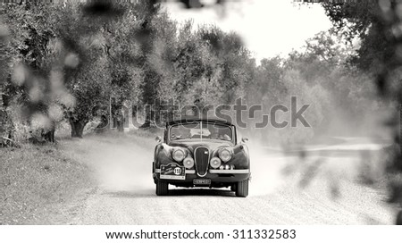 CASTELNUOVO BERARDENGA (SI), ITALY - SEPTEMBER 20: A Jaguar XK120 takes part to the GP Nuvolari classic car race on September 20, 2014 in Castelnuovo Berardenga (SI). The car was built in 1954 - stock photo