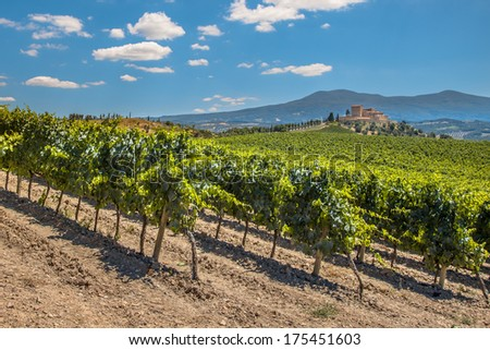 Castle Overseeing Vineyards from a Hill on a Clear Summer Day - stock photo