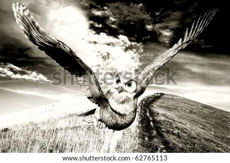 casual flight on farm brownie sepia - stock photo