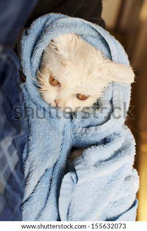 Cat after a bath  - stock photo