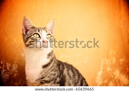 Cat against abstract background - stock photo