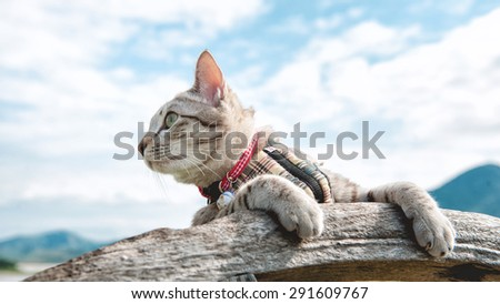 Cat and Blue Sky Background - stock photo