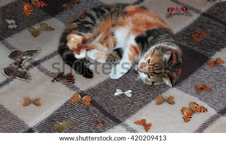 cat and butterflies - stock photo