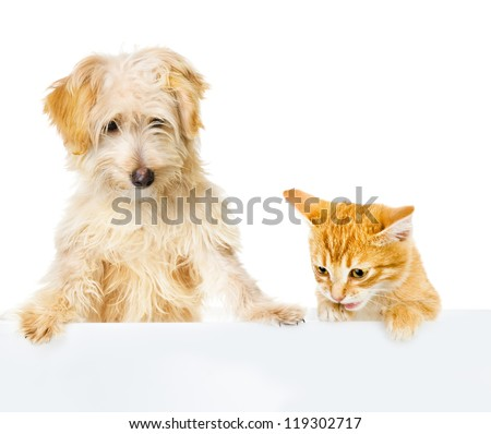 Cat and Dog above white banner. looking down. isolated on white background - stock photo