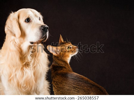cats and dog