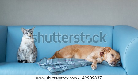 Cat and dog at the blue modern bench - stock photo