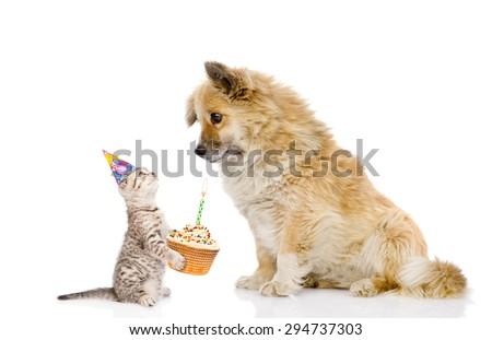 cat and dog celebrate birthday. isolated on white background - stock photo