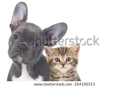 Cat and dog faces isolated - stock photo