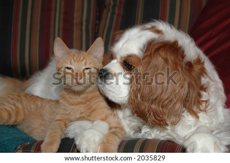 Cat and dog friends - stock photo