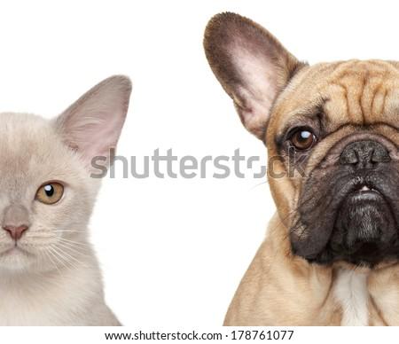 Cat and Dog. Half of muzzle close-up portrait isolated on white background - stock photo