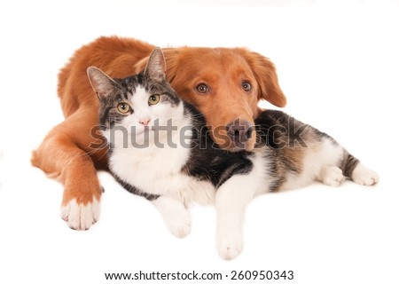Cat and dog in an intimate pose, isolated on white - stock photo