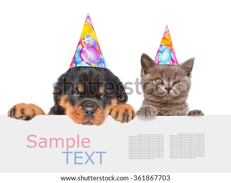 Cat and Dog in birthday hats peeking from behind empty board and looking at camera. isolated on white background - stock photo