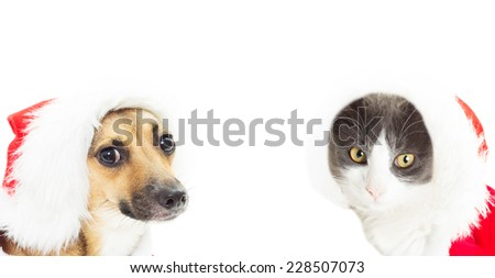 cat and dog in Christmas costume isolated on white background - stock photo