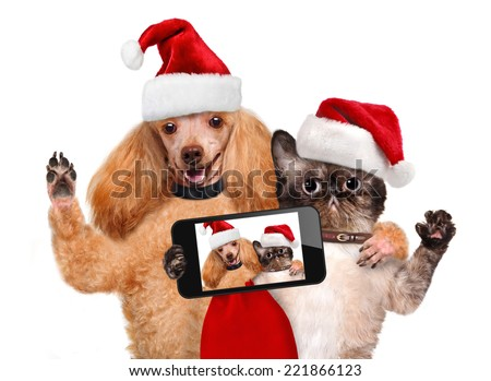 Cat and dog in red Christmas hats taking a selfie together with a smartphone - stock photo