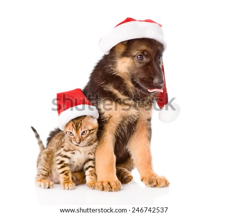 cat and dog in red santa hat sitting together. isolated on white background - stock photo